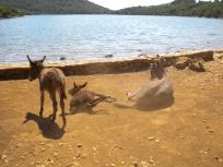Salt lake in Natural Park Telašćica