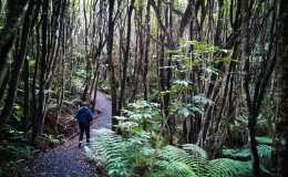 Bush walk: Long Hilly Walking Track